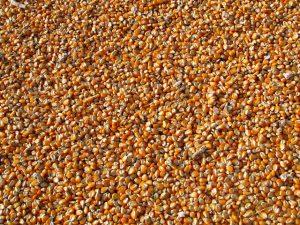 kukurydza przepis